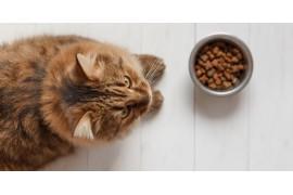 Jak wybrać odpowiednią karmę dla kota?
