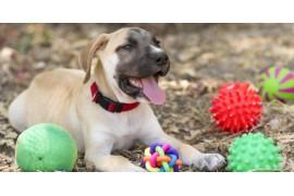 Jakie zabawki wybrać dla swojego psa?
